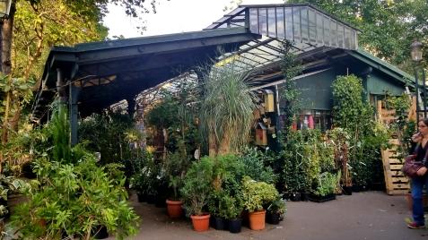 Plant and Bird market!